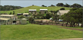 Ace Hi Riding Ranch - Bundaberg Accommodation