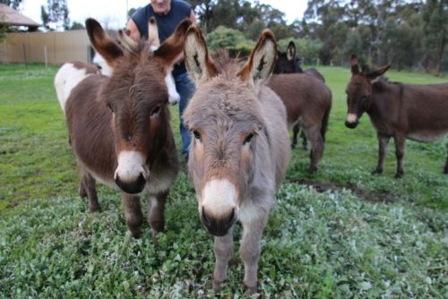 Donkey Tales Farm Cottages - Bundaberg Accommodation