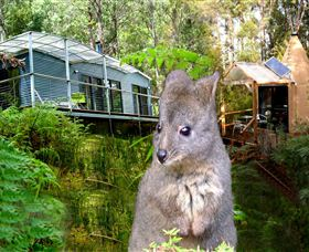 Huon Bush Retreats - Bundaberg Accommodation
