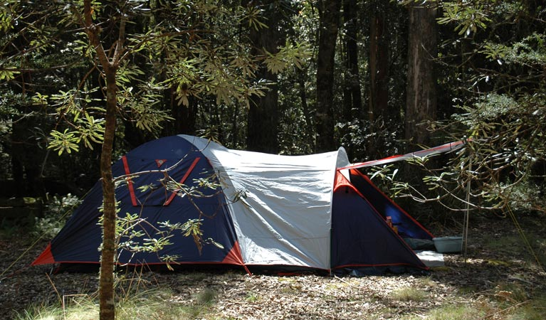Thungutti campground - Bundaberg Accommodation