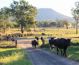 Tommerups Dairy Farmstay - Bundaberg Accommodation