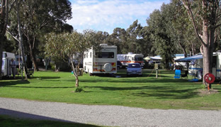 Pinjarra Caravan Park - Bundaberg Accommodation