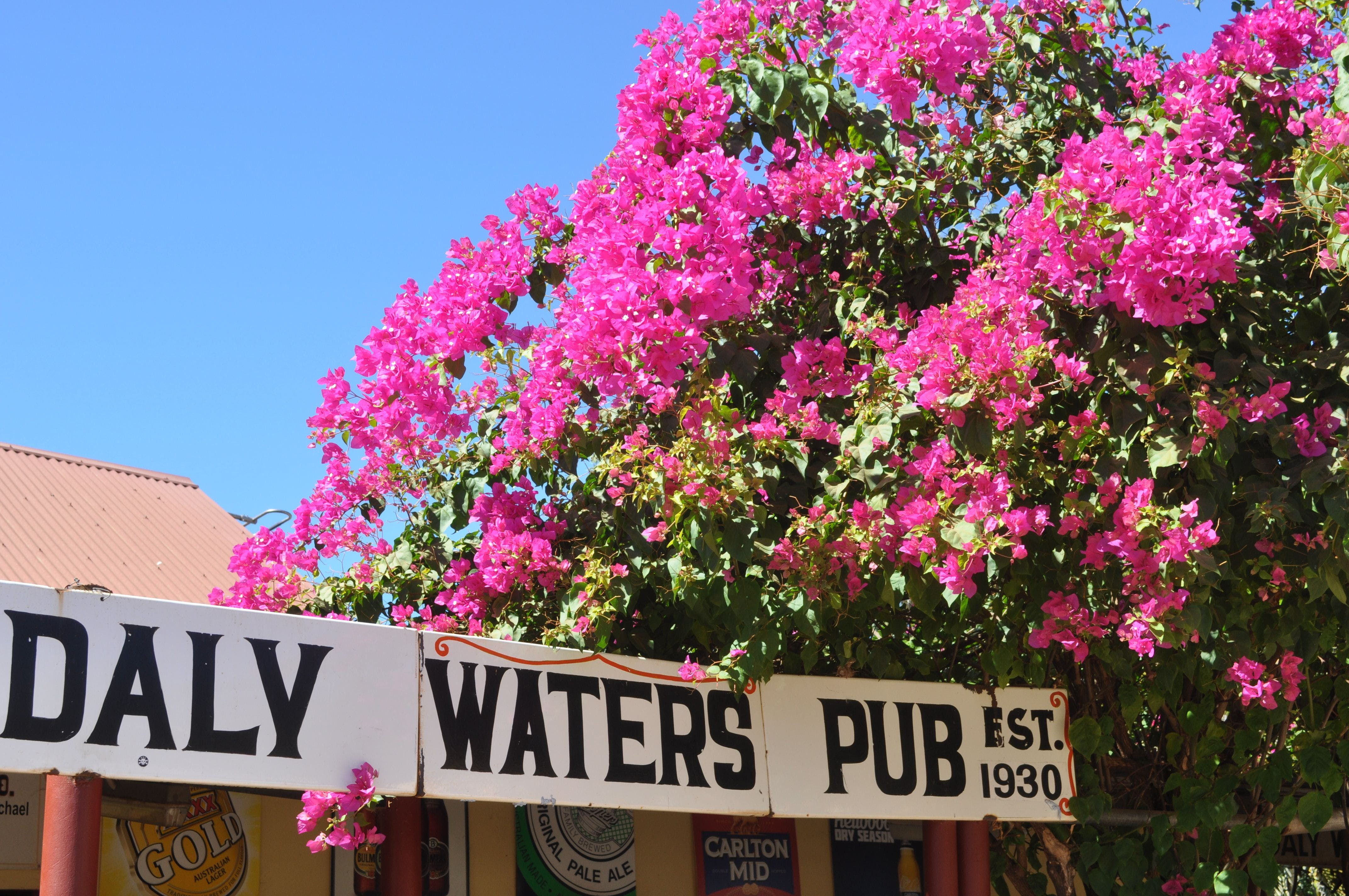 Daly Waters Historic Pub - Bundaberg Accommodation