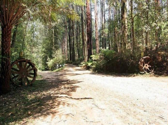 Hill n Dale Farm Cottages - Bundaberg Accommodation