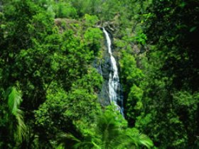 Kondalilla National Park - Bundaberg Accommodation