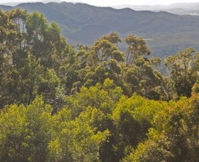 Conondale National Park - Bundaberg Accommodation
