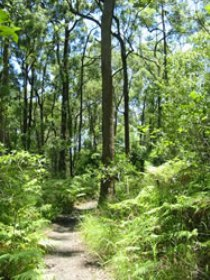 Mapleton Falls National Park - Bundaberg Accommodation
