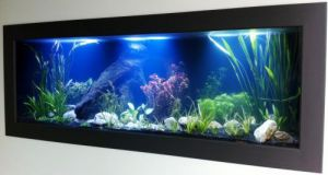 Aquariums in Cairns - Bundaberg Accommodation