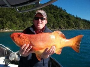 Gone Fishing by Coral Sea Fishing Charters Airlie Beach - Bundaberg Accommodation
