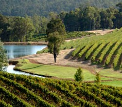 Brookhampton Estate Vineyard - Bundaberg Accommodation