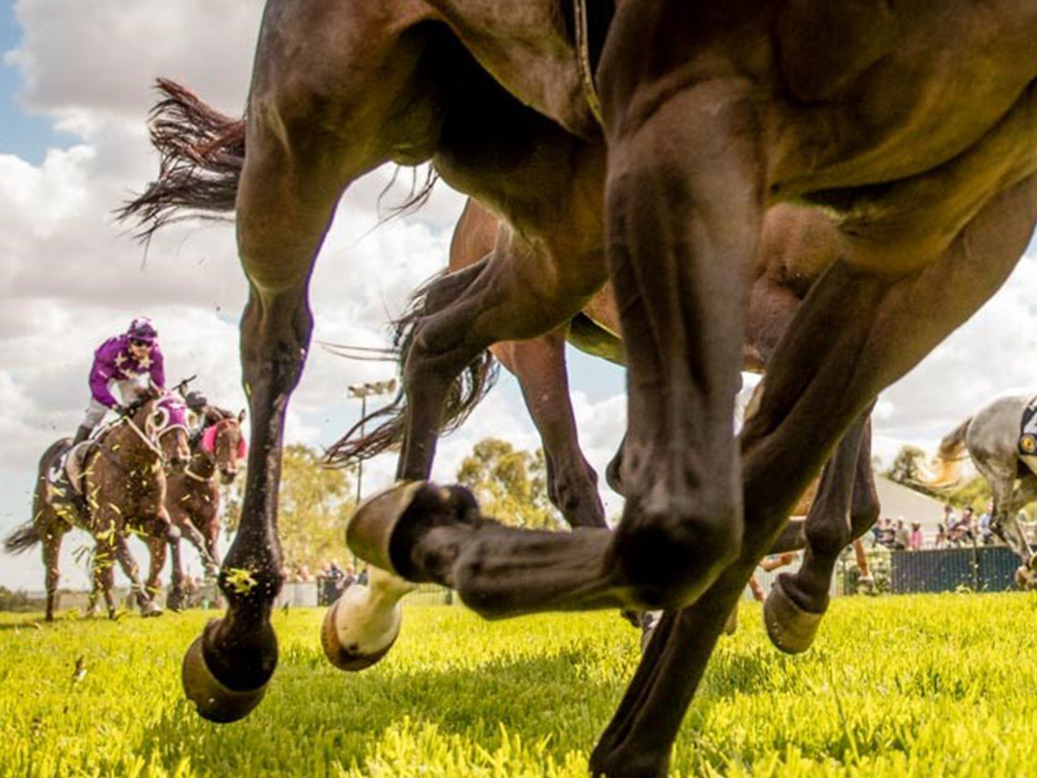 Night Markets and Race Day - Bundaberg Accommodation