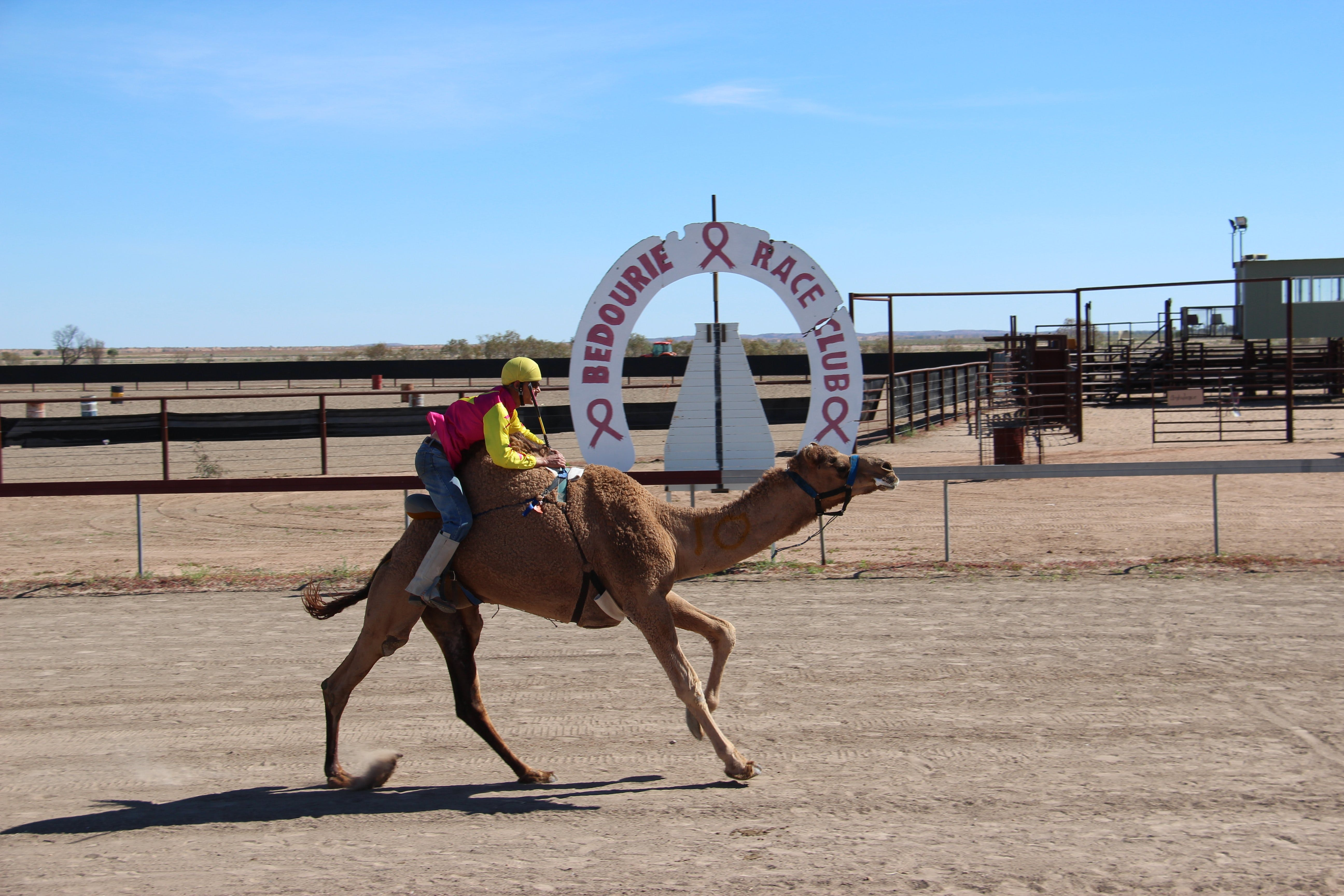 Bedourie Camel and Pig Races and Camp oven Cook-off - Bundaberg Accommodation