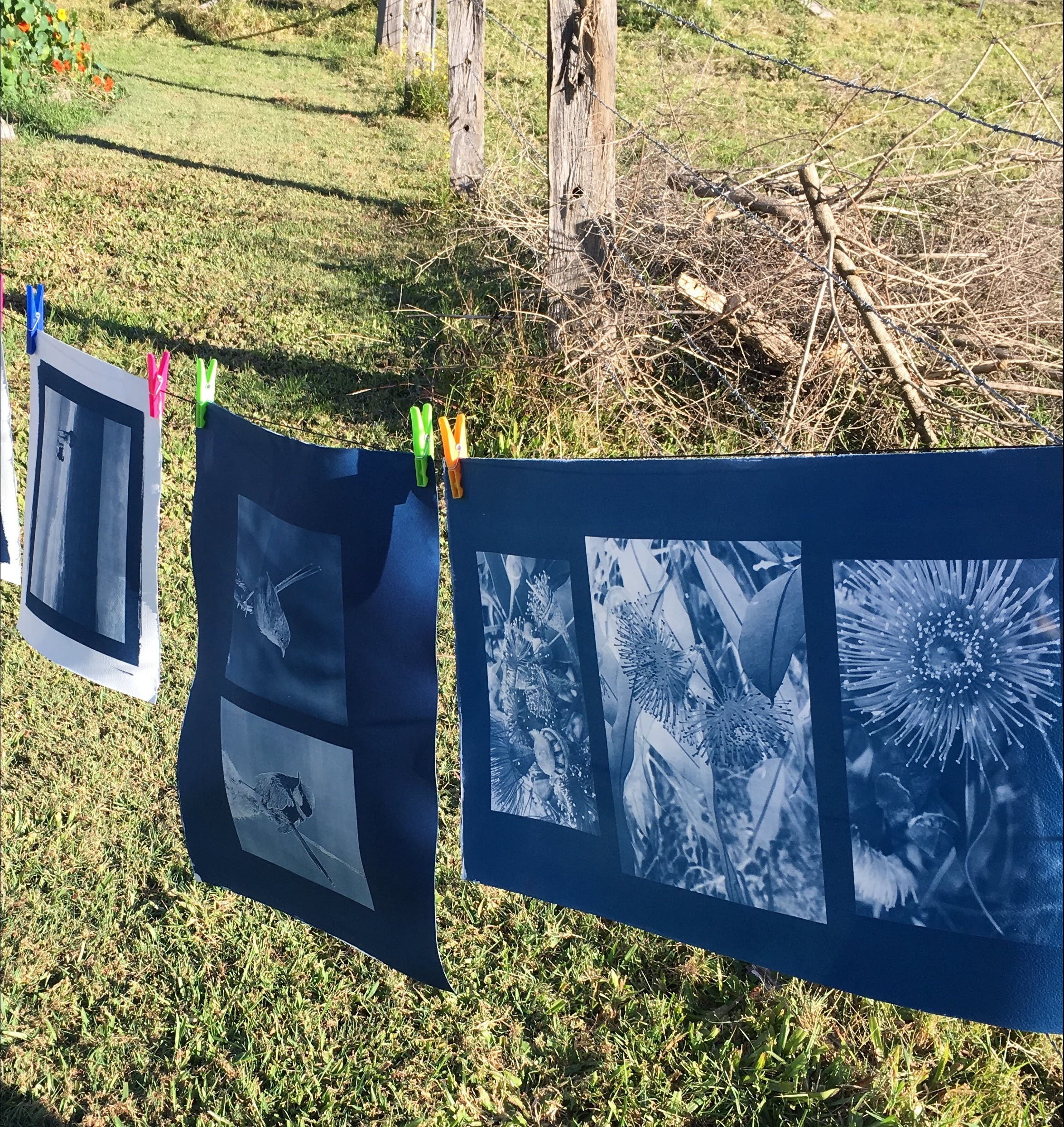 Photography - Cyanotype - Bundaberg Accommodation