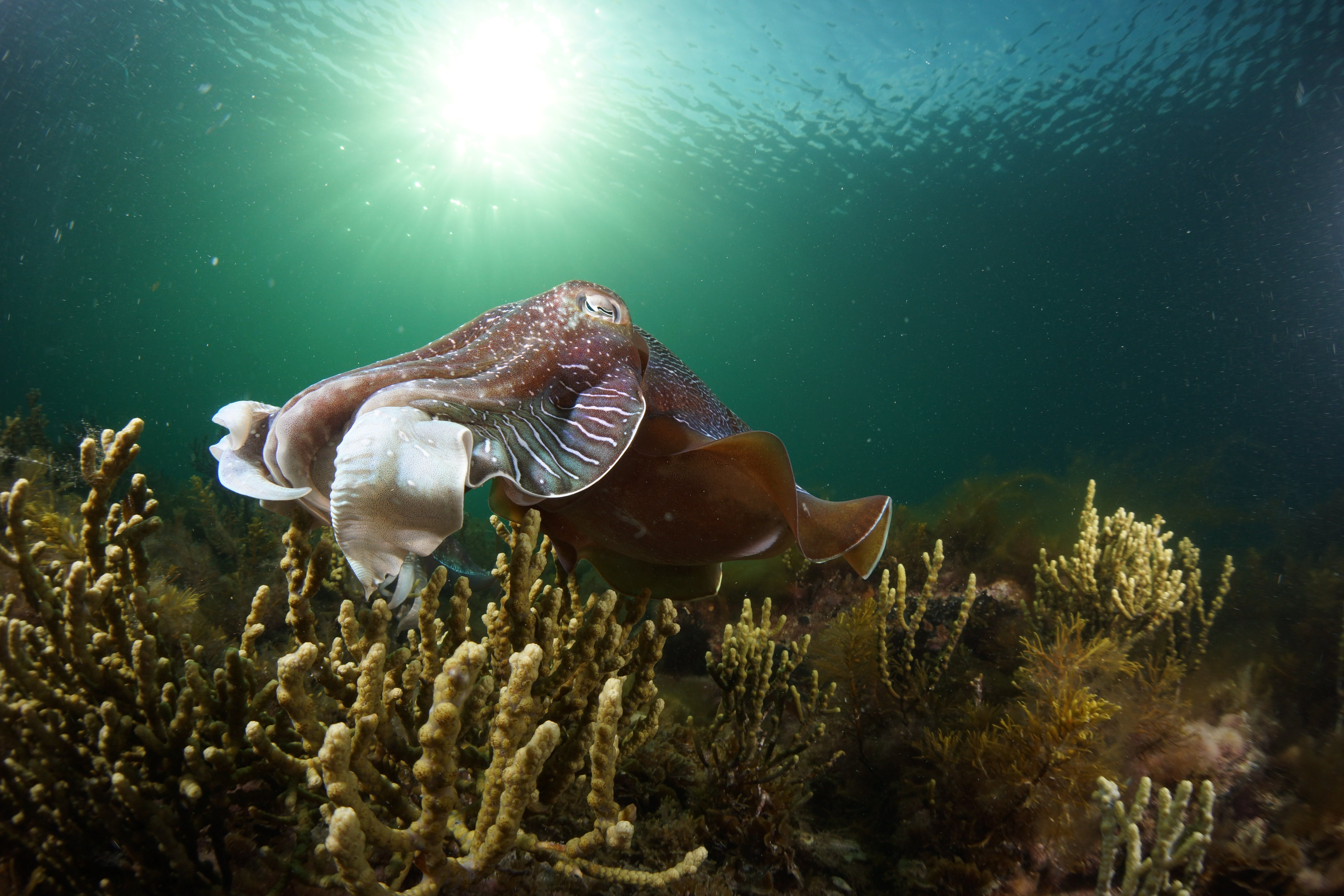 Cuttlefish Diving  Snorkeling EVERYDAY May -August - Bundaberg Accommodation