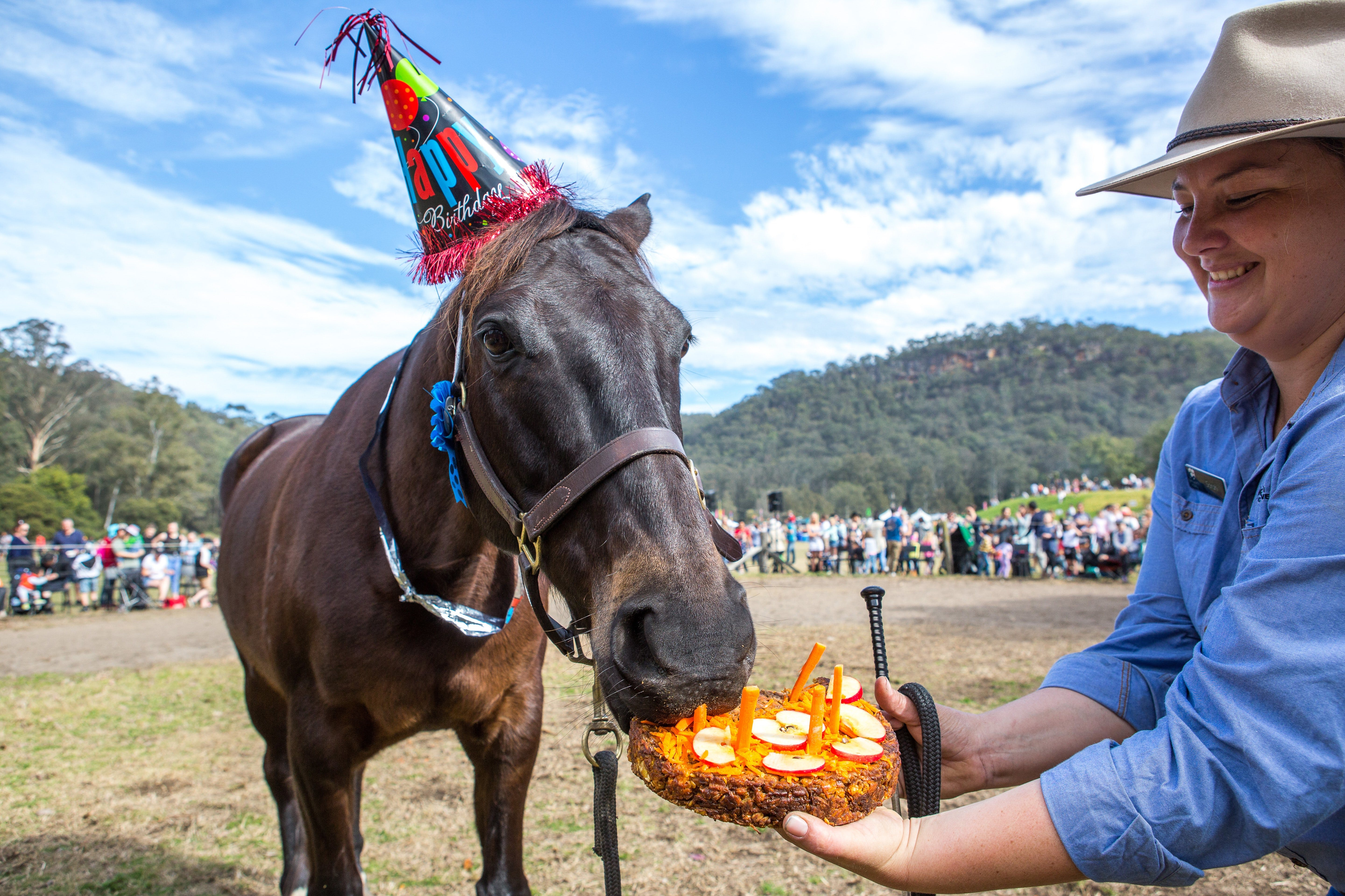 Horses Birthday Festival - Bundaberg Accommodation