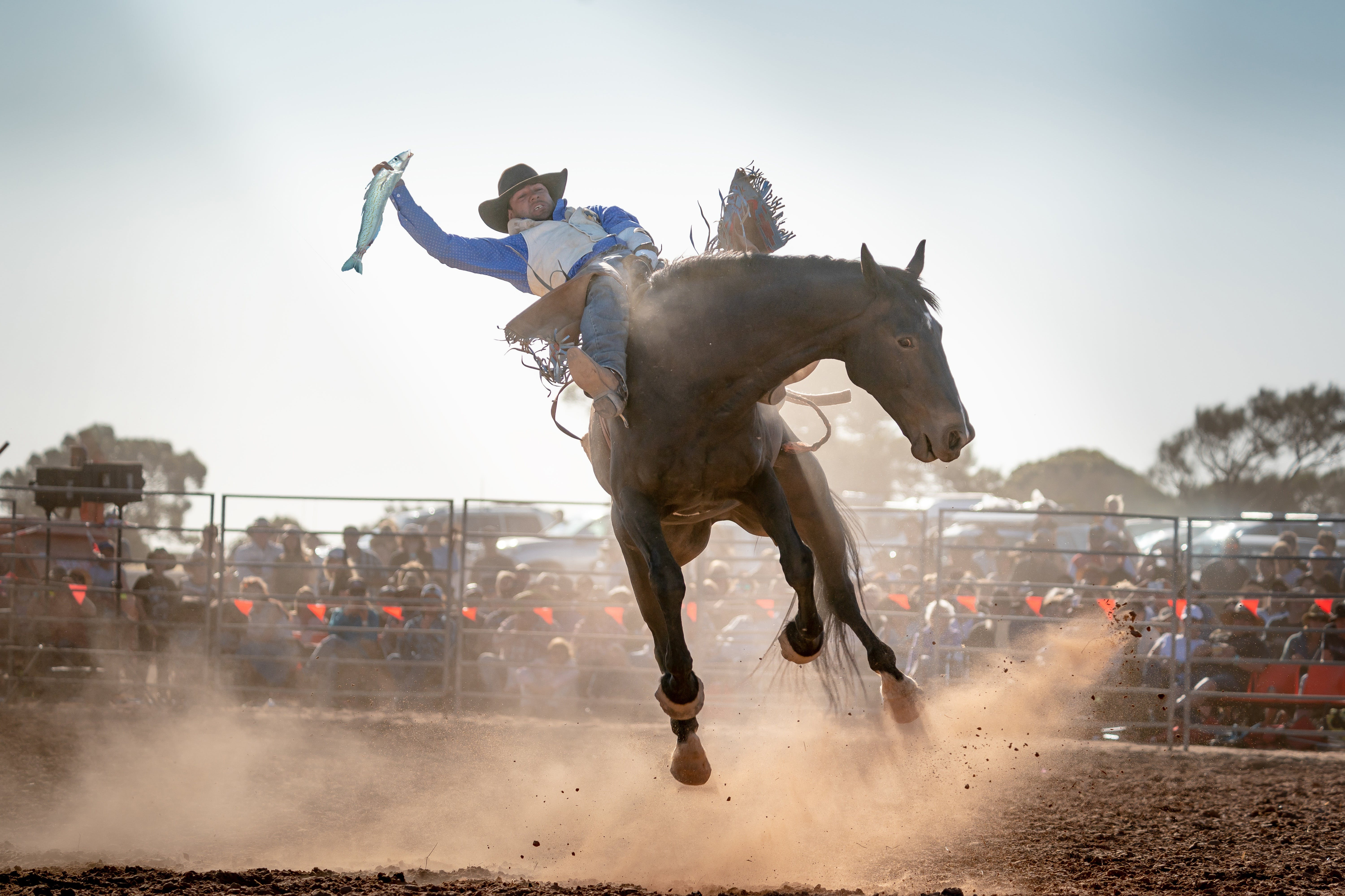 Rodeo by the Sea - Streaky Bay - Bundaberg Accommodation
