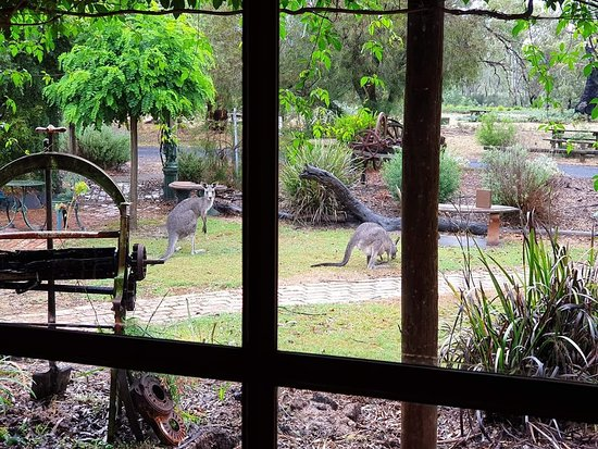 The Wander Inn - Bundaberg Accommodation