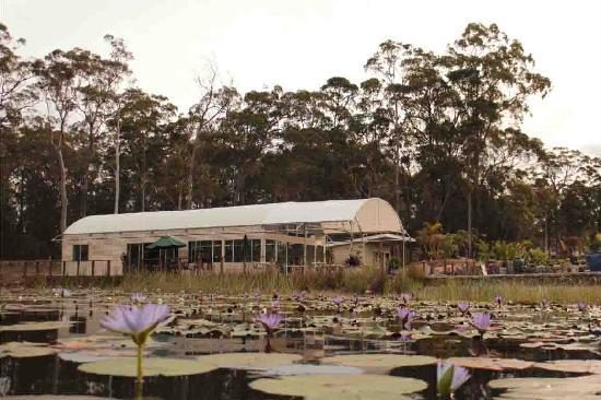 Abundance Cafe and Garden Centre - Bundaberg Accommodation